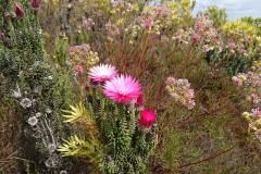03_DSC_0349-Fynbos
