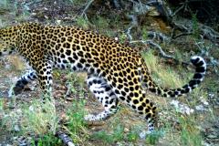 V-Leopard_I_00057a